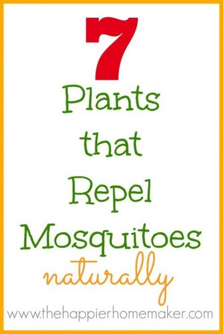 43  Ideas plants that repel mosquitos remedies #plantsthatrepelmosquitoes
