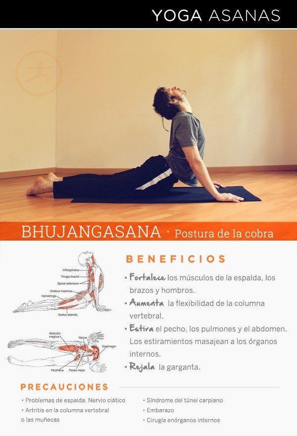 Beneficios de practicar Yoga · Bhujangasana - Postura de la Cobra por Diego  Cano aa7e51e13f80