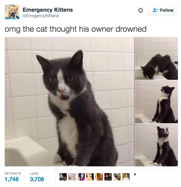 Cheezburger Image 9018956032 Cats Cat Memes Cat People