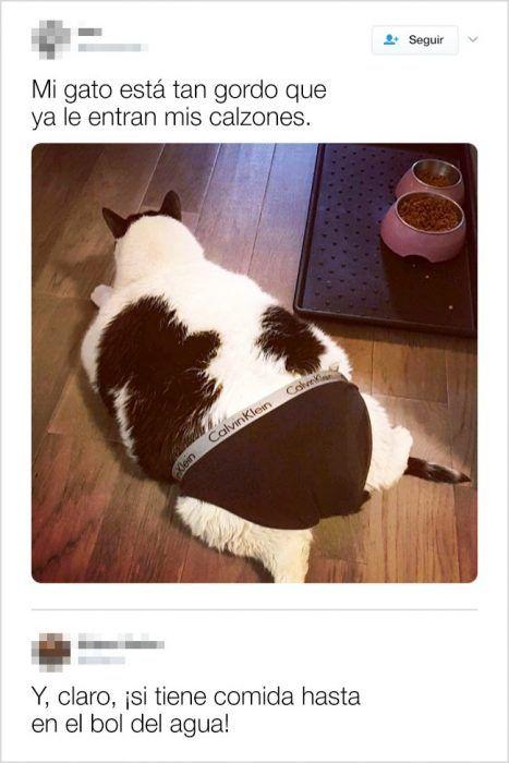 24 Tuits Demuestran Que La Vida Es Mucho Mejor Con Animales Memes Divertidos Memes De Animales Divertidos Memes Comicos