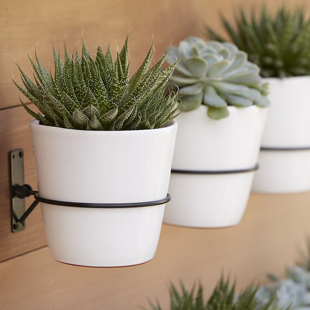 Wall Planter Hook Reviews Crate And Barrel Succulent Wall Planter Wall Mounted Planters Wall Planter