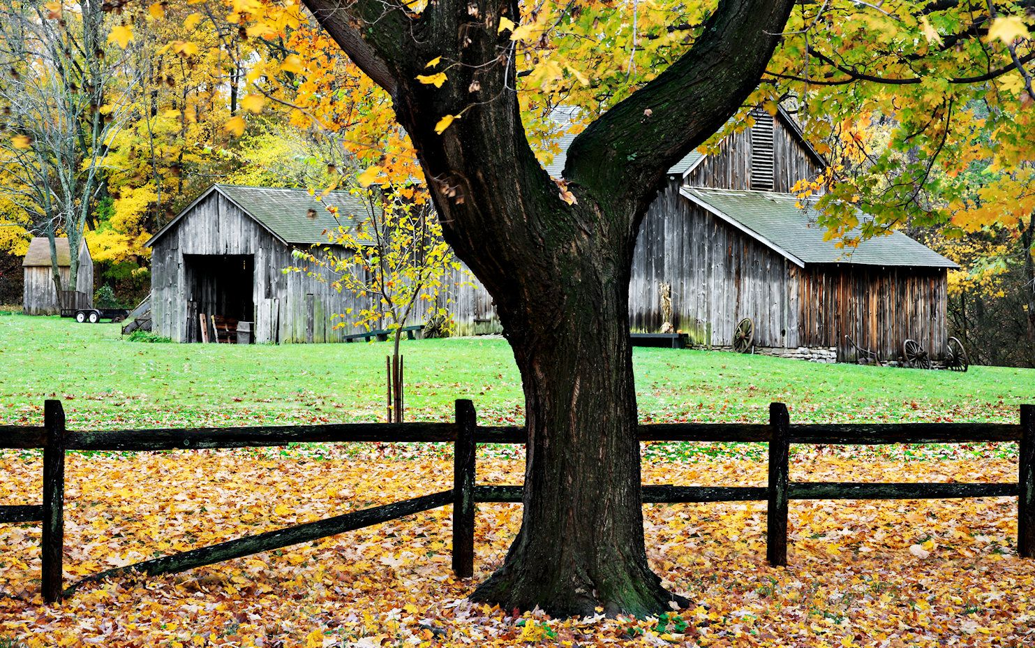 Tree and Barn Jigsaw Puzzle