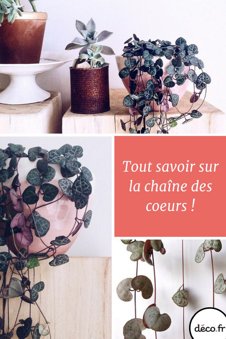 la cha ne des coeurs une plante verte raffin e et romantique m6 sulent pinterest. Black Bedroom Furniture Sets. Home Design Ideas