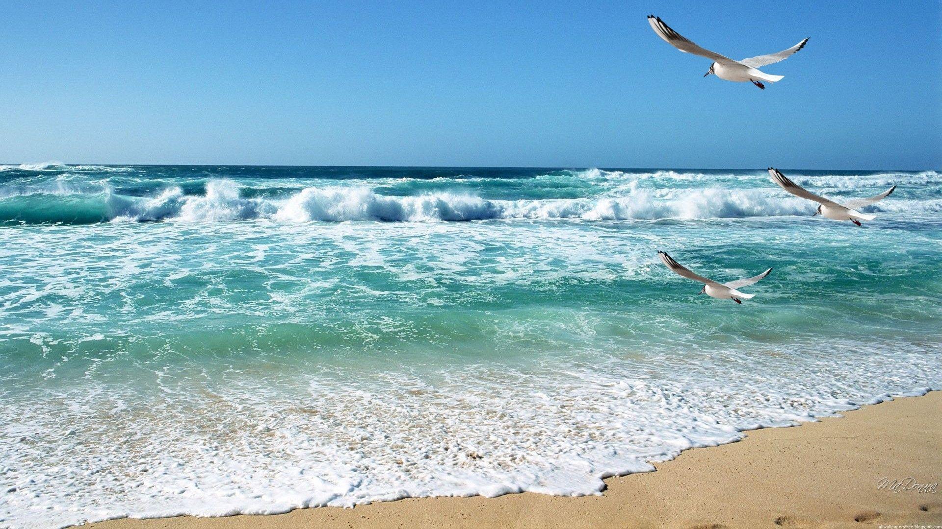 Beach Calming Waves Seashore Bay Ocean Birds Sky Seagulls Sand Serene Warm Tranquil Vacation Sea Calm Wallpaper Ocean Landscape Beach Landscape Sea Photography Wallpaper beach waves sea sand coast