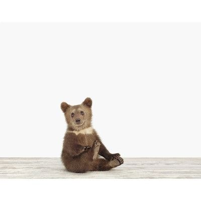 """The Animal Print Shop by Sharon Montrose Baby Animals Bear Cub by Sharon Montrose Photographic Print Size: 7"""" H x 9"""" W"""