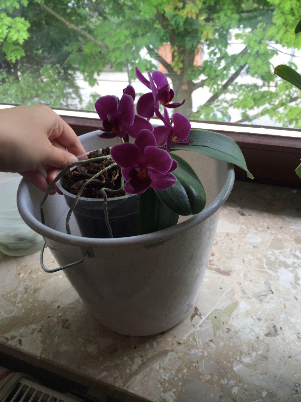 Orchideen pflegen: Die besten Tipps für die exotischen Pflanzen