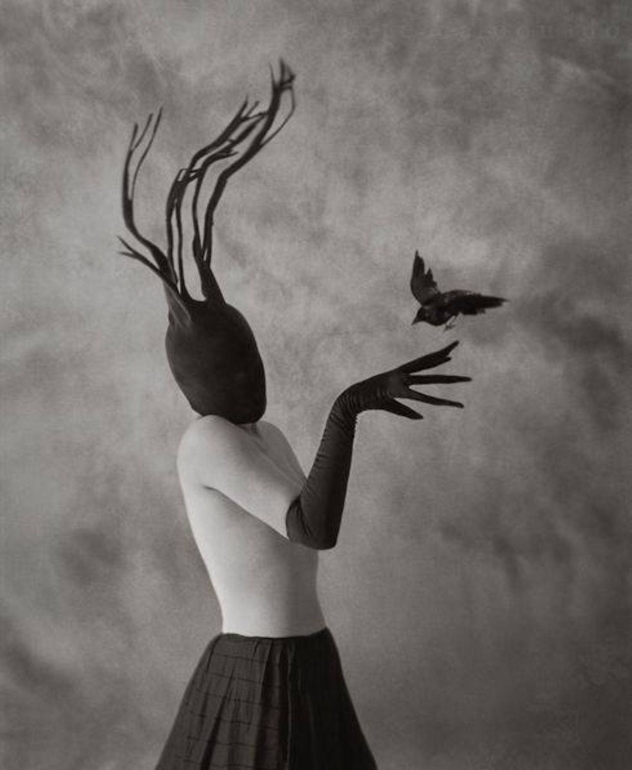 Pin By This Evil Bunny On Art Raven Photography Surrealism