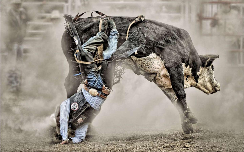 Rodeo Desktop Nexus Wallpapers Bull Riding Bull Riders Rodeo Life