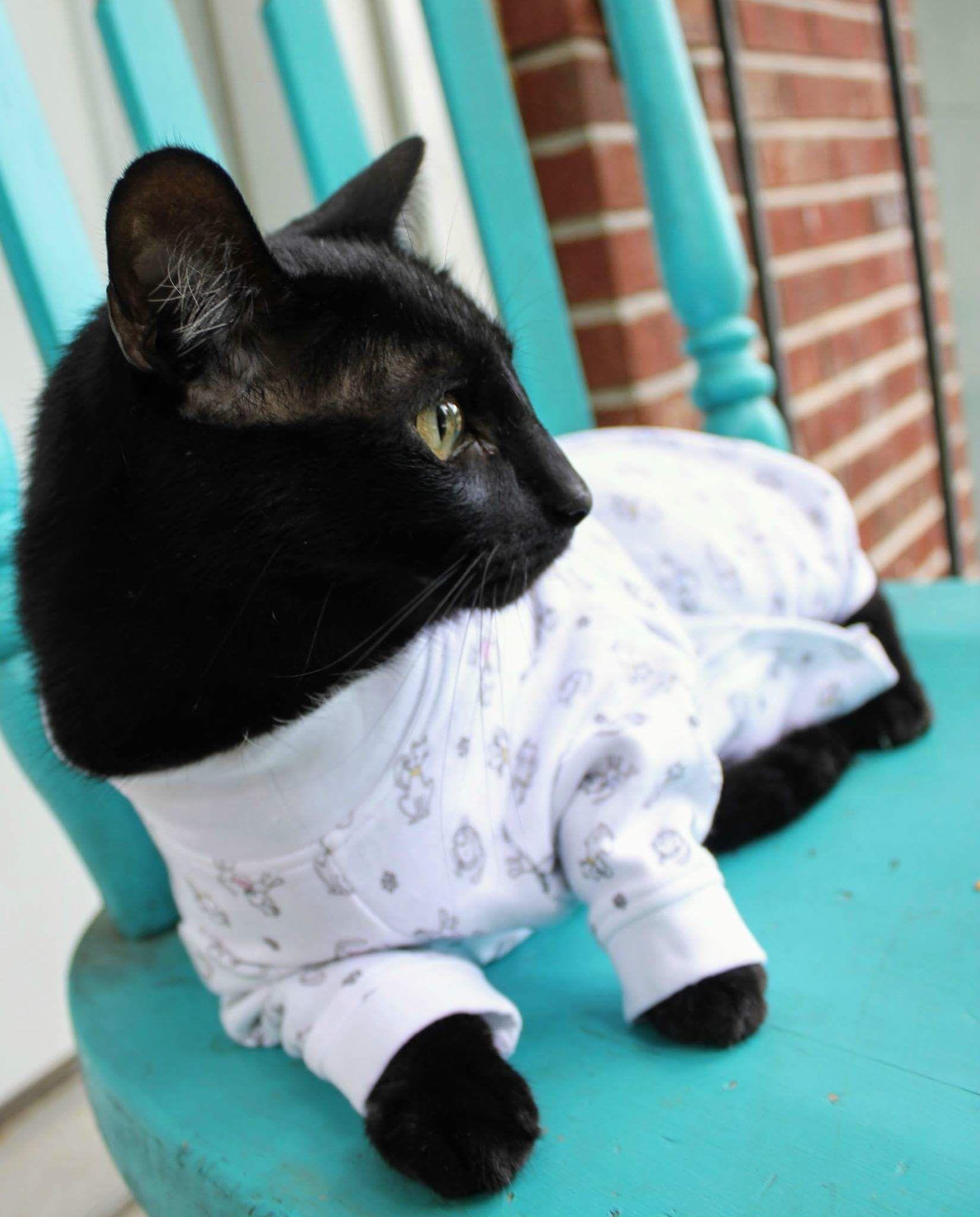 Pin On Cat Covermebytui