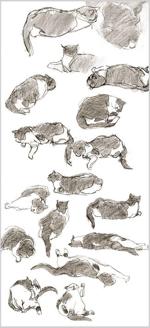 Cat Sketches | Cartoon cats | Pinterest | Gato, Dibujo y Fotografía