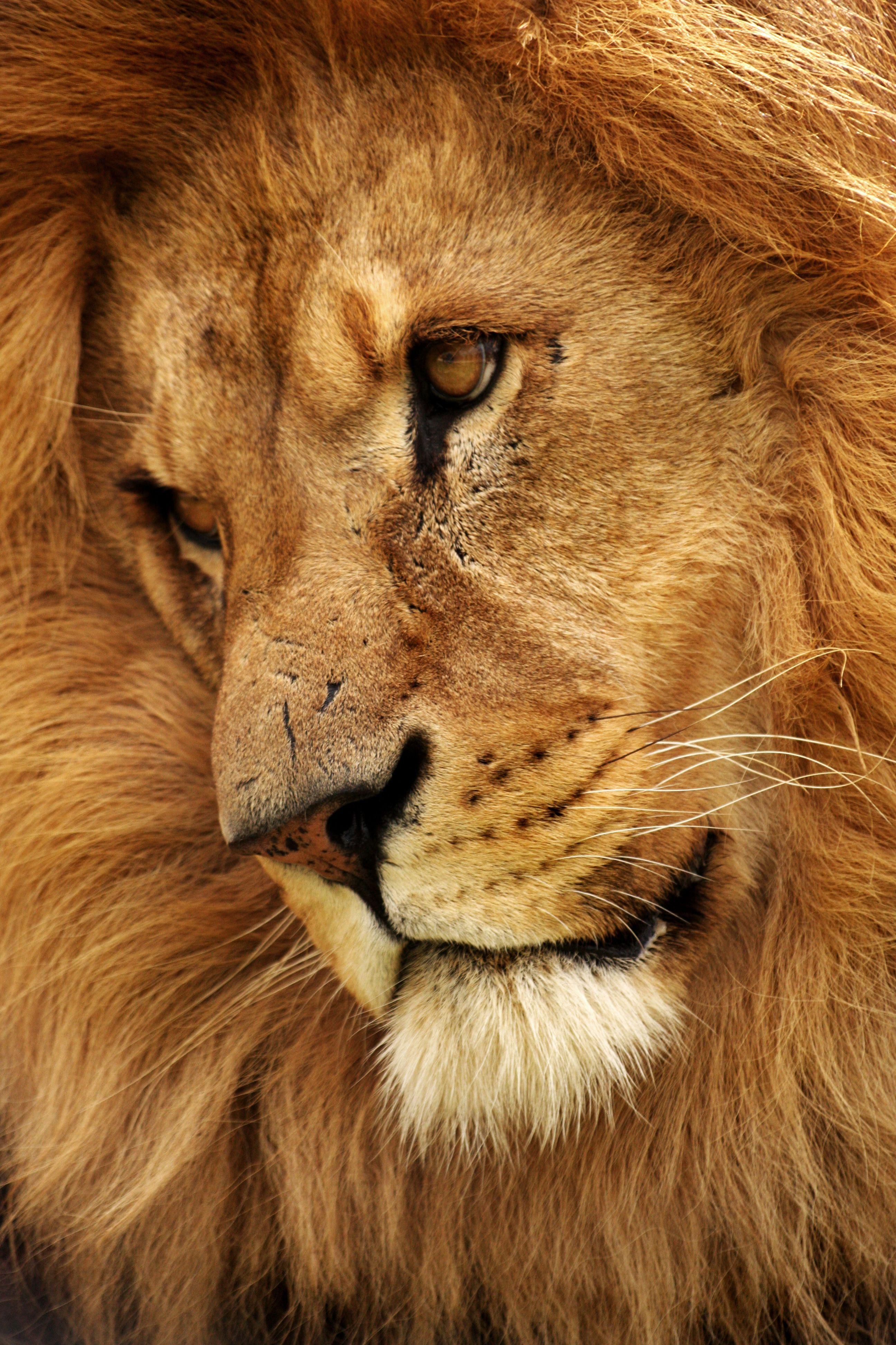 львица плачет картинки выглядит один