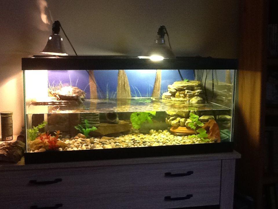 Red eared slider tank setup turtle aquariums for Fish tank turtles