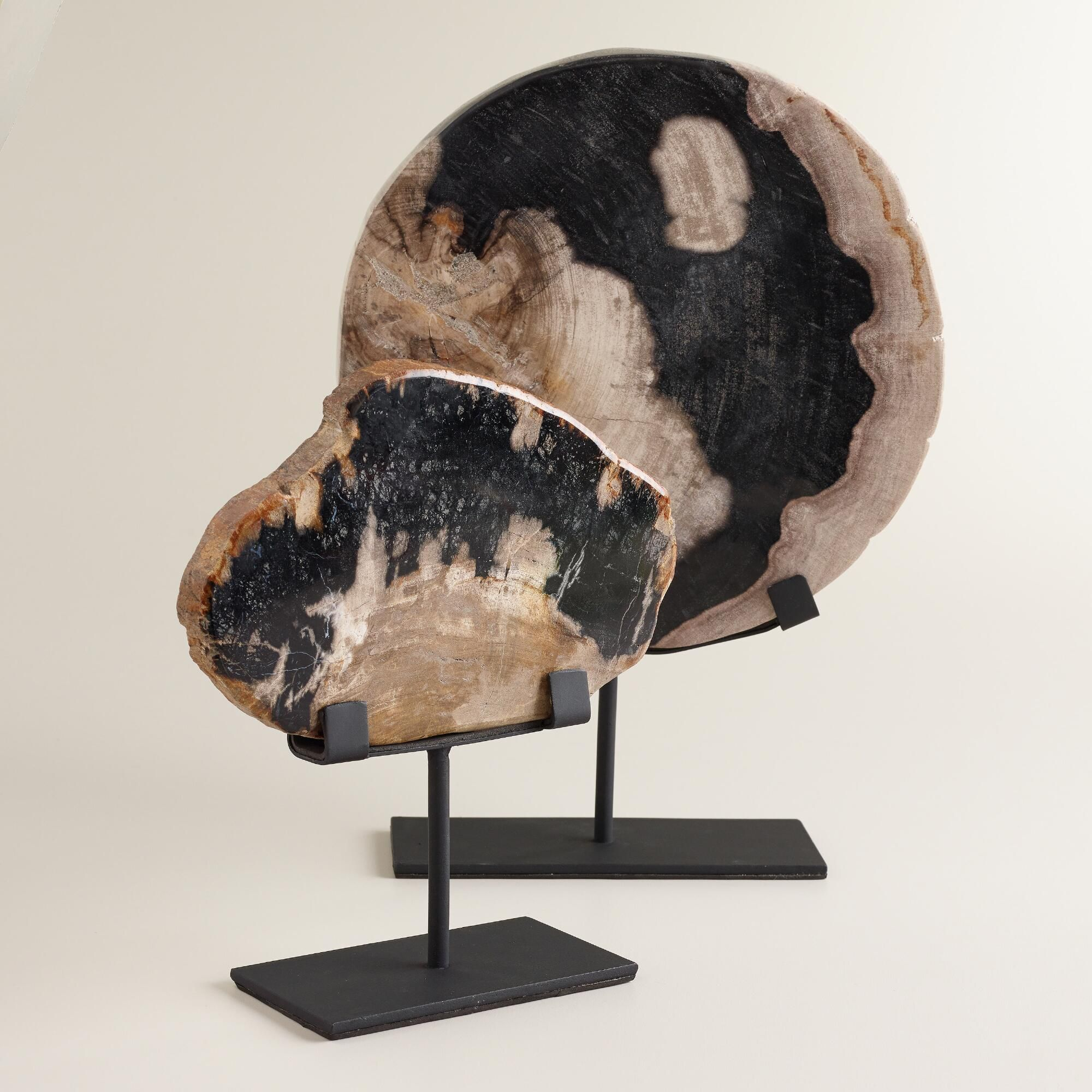 Our Petrified Wood On Stand Is An Authentic Expression Of The Ancient  Beauty Of The Earth.