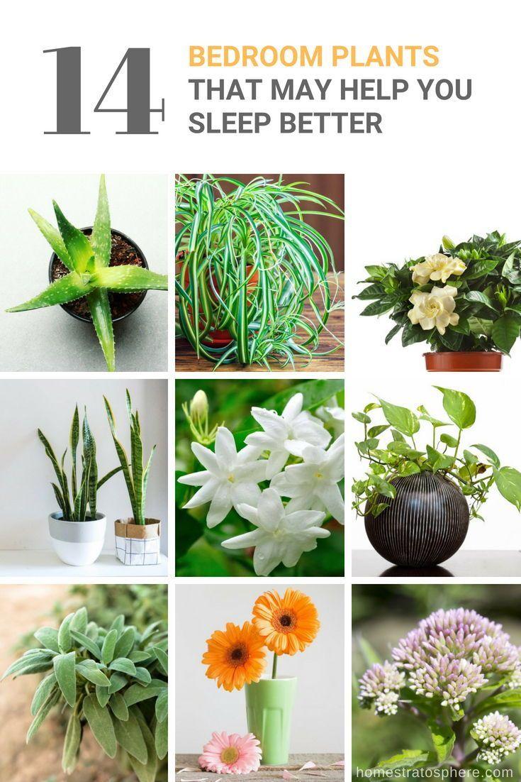 14 Bedroom Plants that May Help You Sleep Better | Bedroom ...