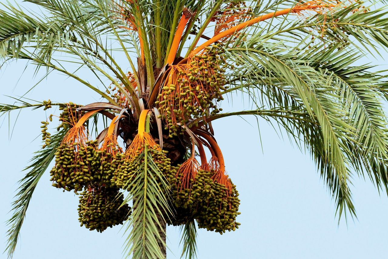 [+] Palm Tree Fronds