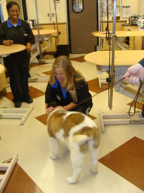 My Very First Dog Groomer Visit At Pet Smart I Was Such A Good Boy Dog Groomers Dog Grooming