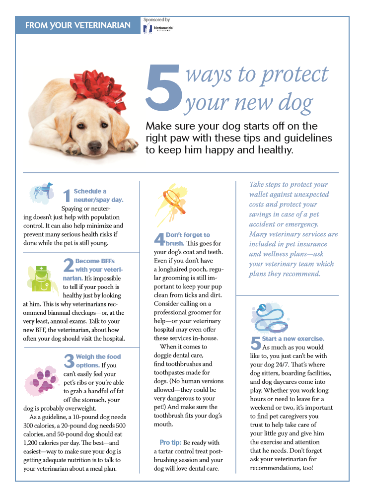 Five Ways To Protect Your New Dog Puppy Training Tips Pet Clinic Pet Health Care