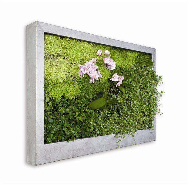 jardin vertical cuadros vivos verde