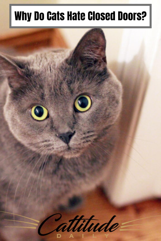 Pin on Pet Information