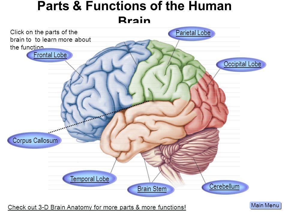 Pin by Mathivathanarajan-Rajendran on Brain(மூளை)   Pinterest ...