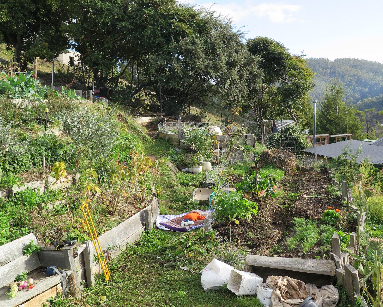 Permaculture | Permaculture gardening, Permaculture ...