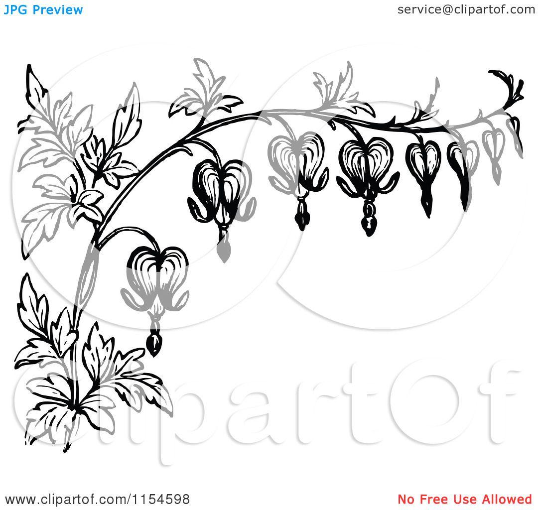 Stylized Bleeding Heart Flower Drawing White Border Of Bleeding Heart Flowers Royalty F Bleeding Heart Flower Bleeding Heart Tattoo Heart Flower Tattoo