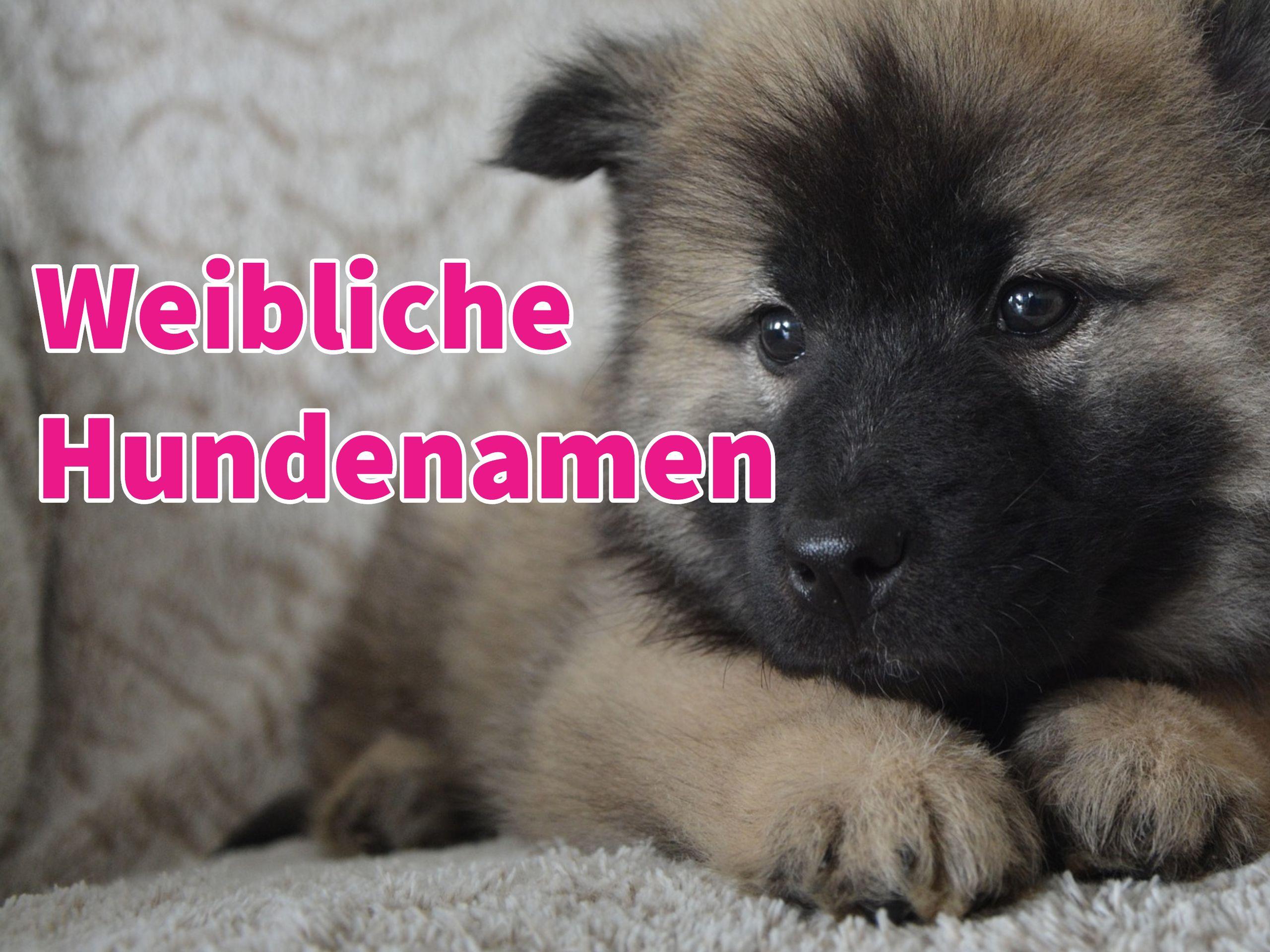Weibliche Hundenamen Mit Bildern Weibliche Hundenamen Namen