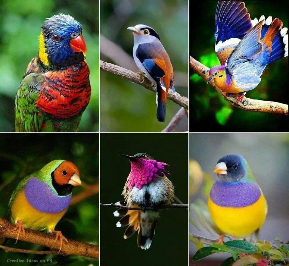 Colorido de pajaritos