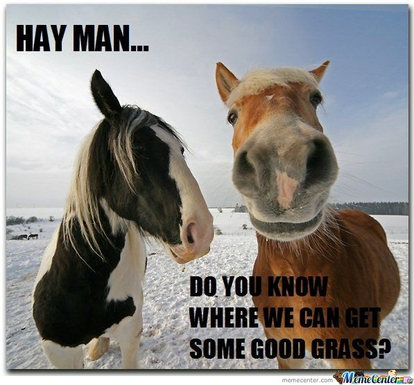 captions memes | Hay Is For Horses by JSCEB - | Horse hay ...