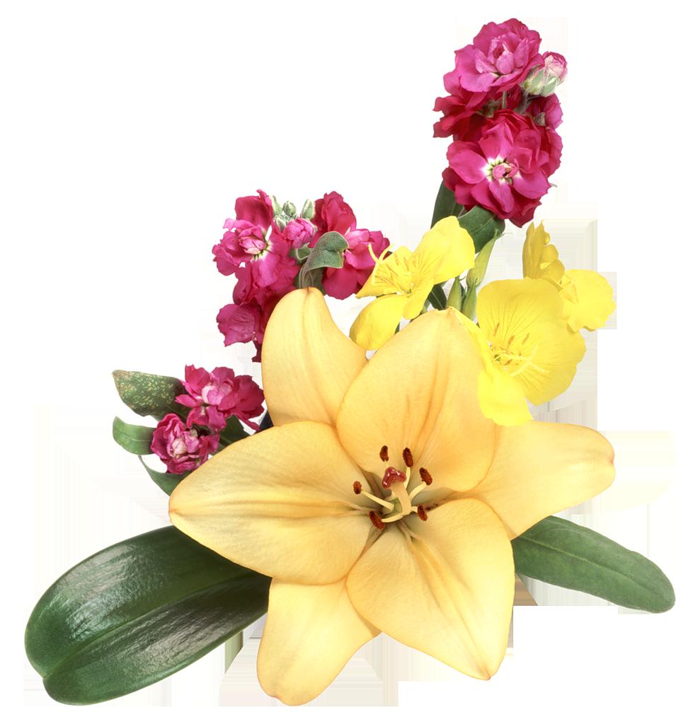 Цветы прозрачные картинки фото