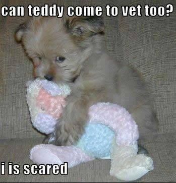 can teddy come to ver too? I is scared  -photo credit to the owner #dogs #cats