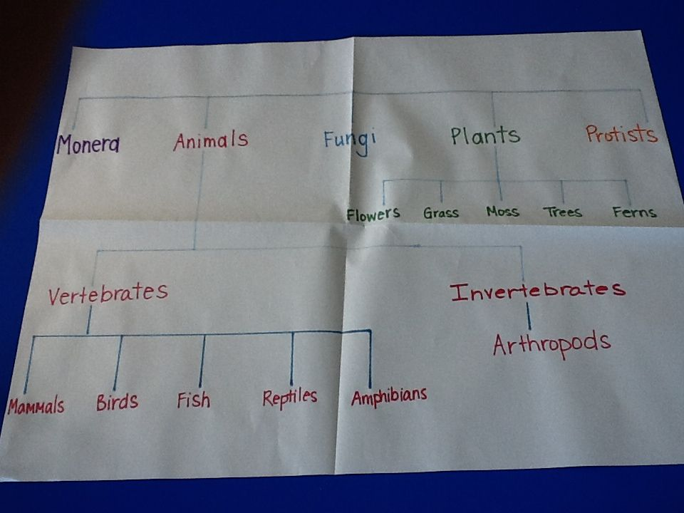 Printable Worksheets five kingdoms of living things worksheets : These are the five kingdoms of classification for living things ...