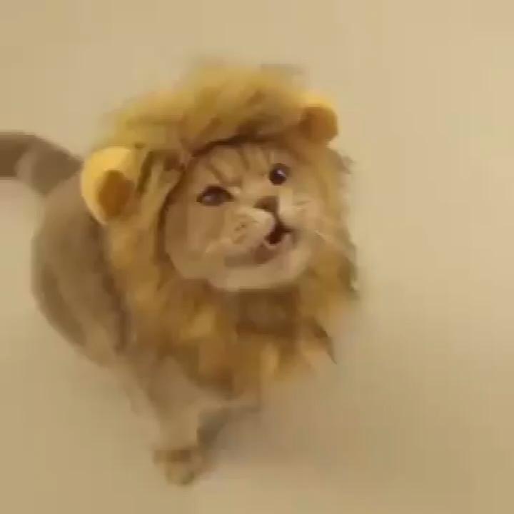 Latest Funny Pets 1