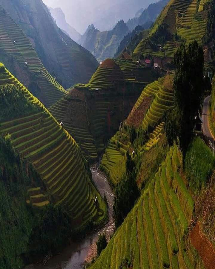 Terraced River Valley, Bhutan