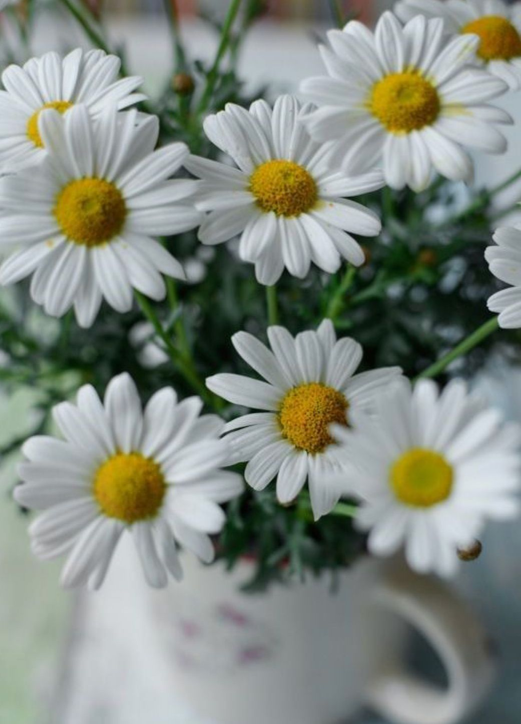 Pin By Jane Clayton On Daisies Flowers Garden Things Pinterest