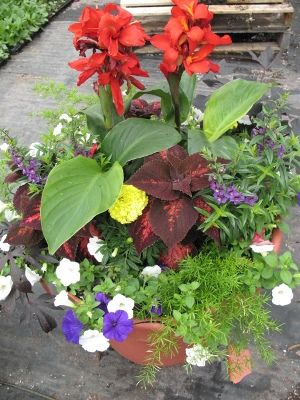 Garden Ideas Tropical tropical garden ideas pots | re: pots and hanging basket ideas