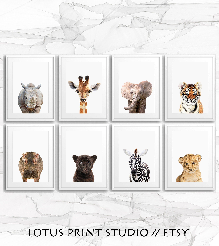 Set Of 8 Safari Animal Prints Nursery Animal Decor Baby Animal Wall Art Safari Theme Gift For Kids Digital Download 057 Hering