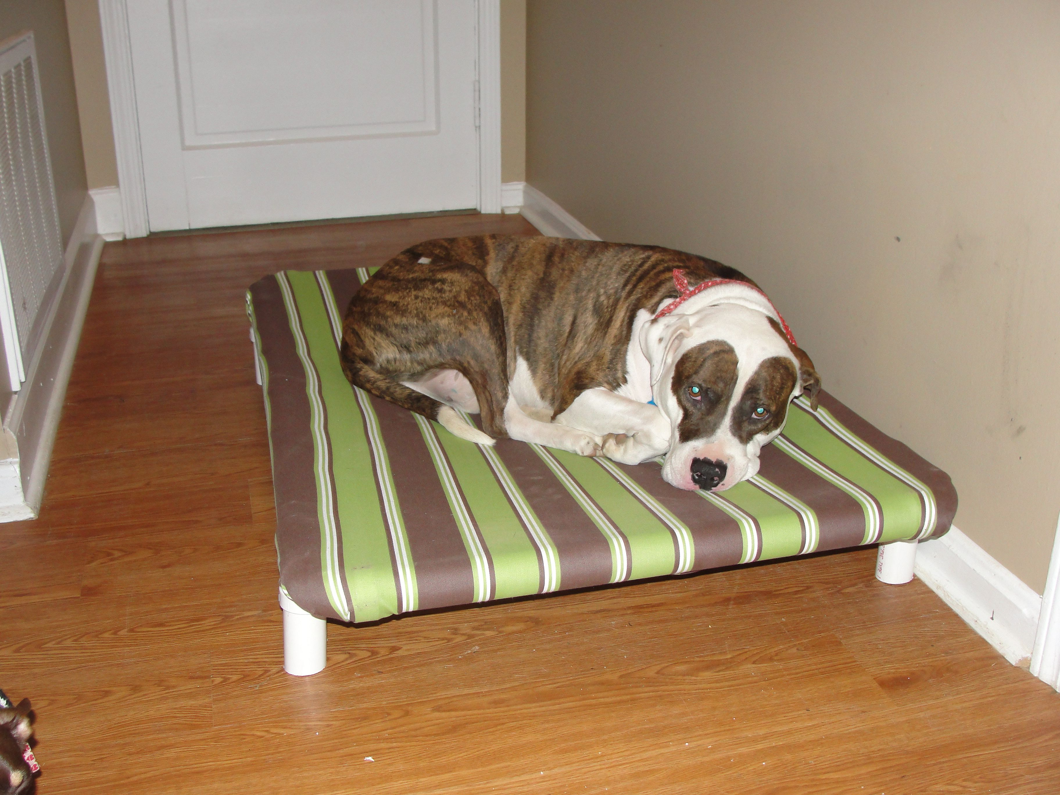 Dog bed Diy dog bed, Elevated dog bed, Dog bed