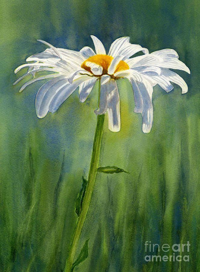 Shasta Daisy Flower With Blue Green Background By Sharon Freeman Daisy Painting Daisy Art Watercolor Landscape