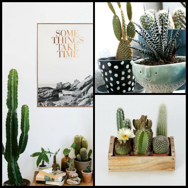 Decorando con: Cactus y suculentas, una muy buena opción   Decorar tu casa es facilisimo.com