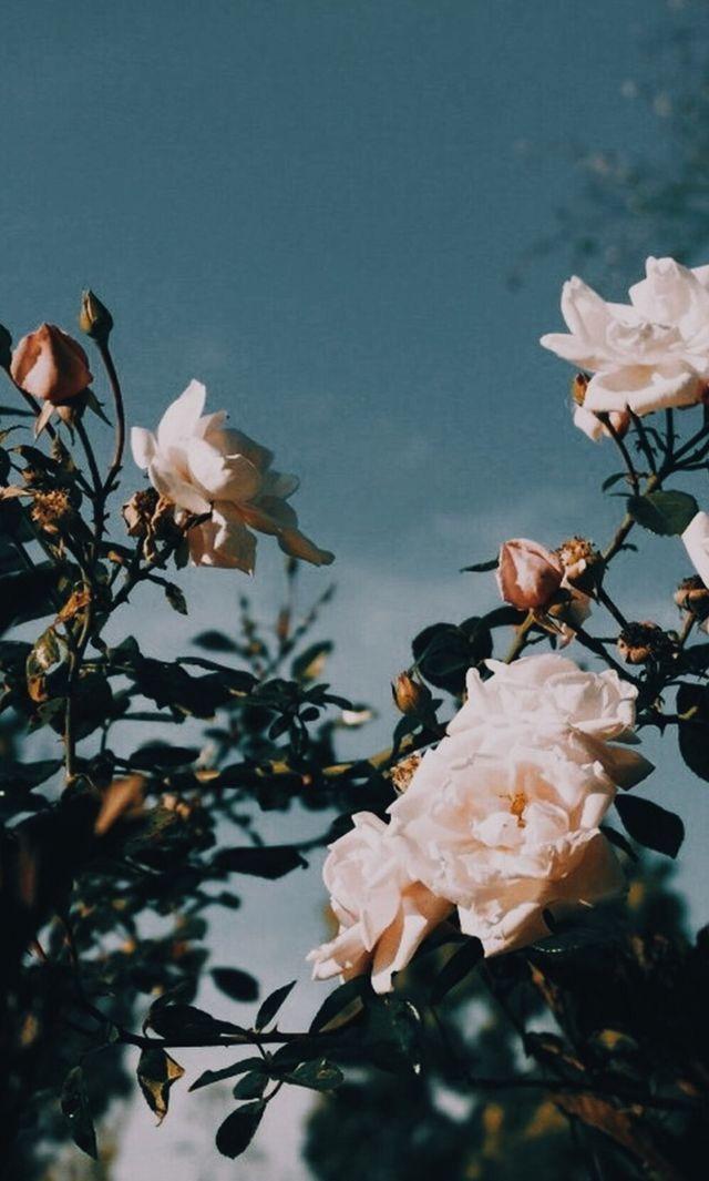 White Flowers Summer Aesthetic Iphone Wallpaper Flower Aesthetic Flower Wallpaper