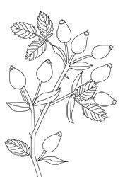 Coloring Pages Chestnuts Chestnuts Coloring Pages Coloring Pages Leaf Stencil Border Embroidery Designs