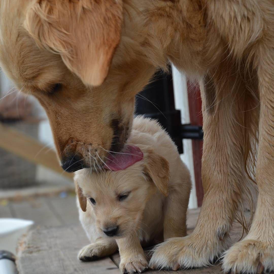 Pin oleh McKenzie McPieter di Dogs Parenthood (Dengan gambar)