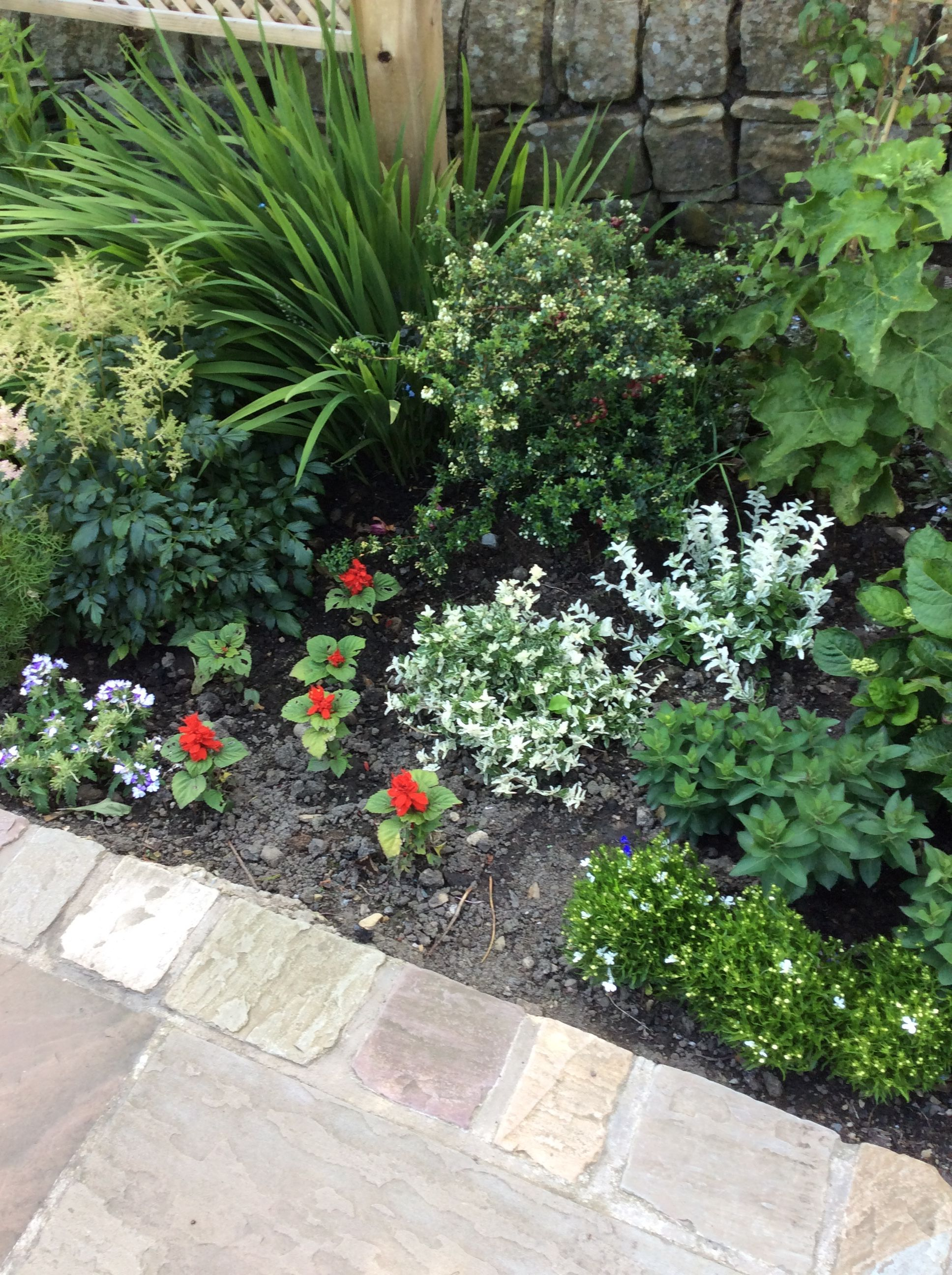 Idea By Dorothy Glynn On Plants In My Garden Plants Garden