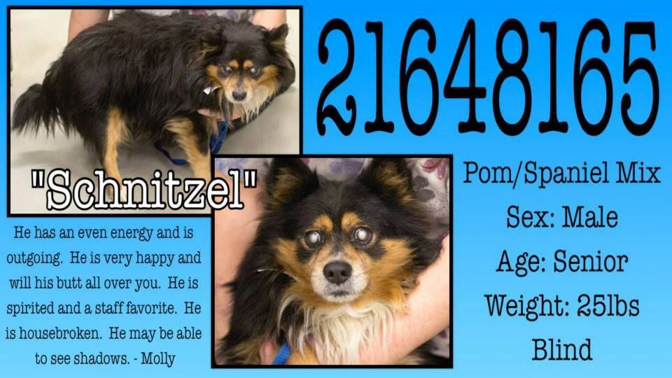 BEYOND URGENT!! CODE RED!! This sweet baby is blind and in
