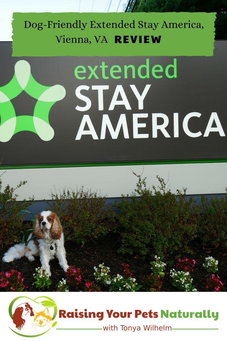 Pet Friendly Hotels in Washington DC Area, Vienna Virginia