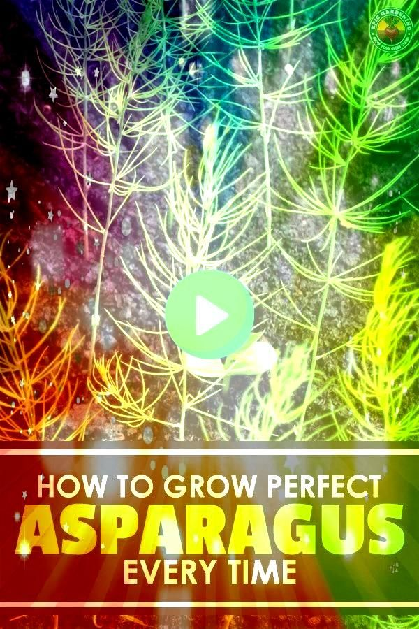 one of the most rewarding plants to grow once you know how to do it Learning how to grow asparagus right is the key Updated for 2018Asparagus is one of the most rewarding...