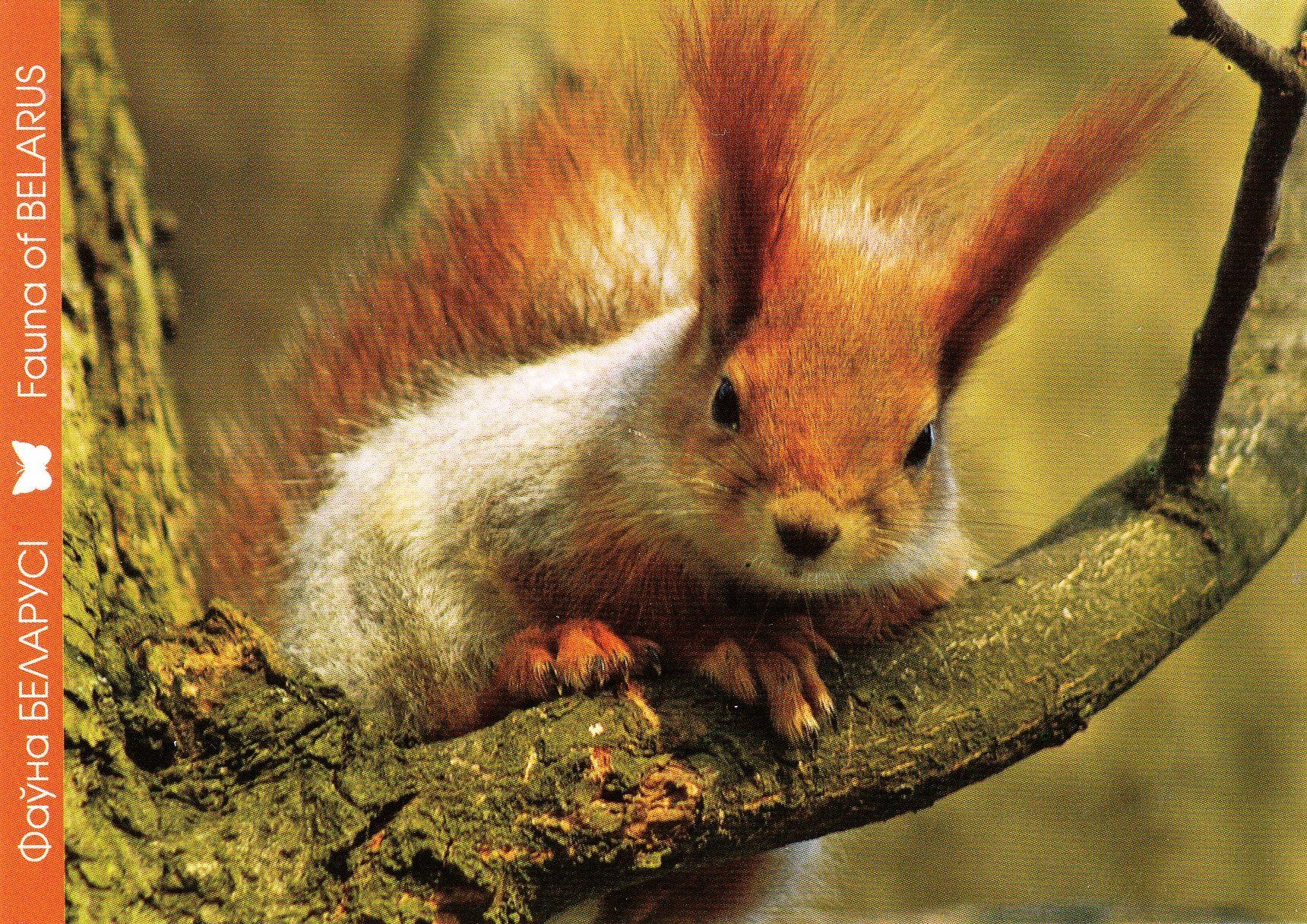 Днем, фауна беларуси открытки белка