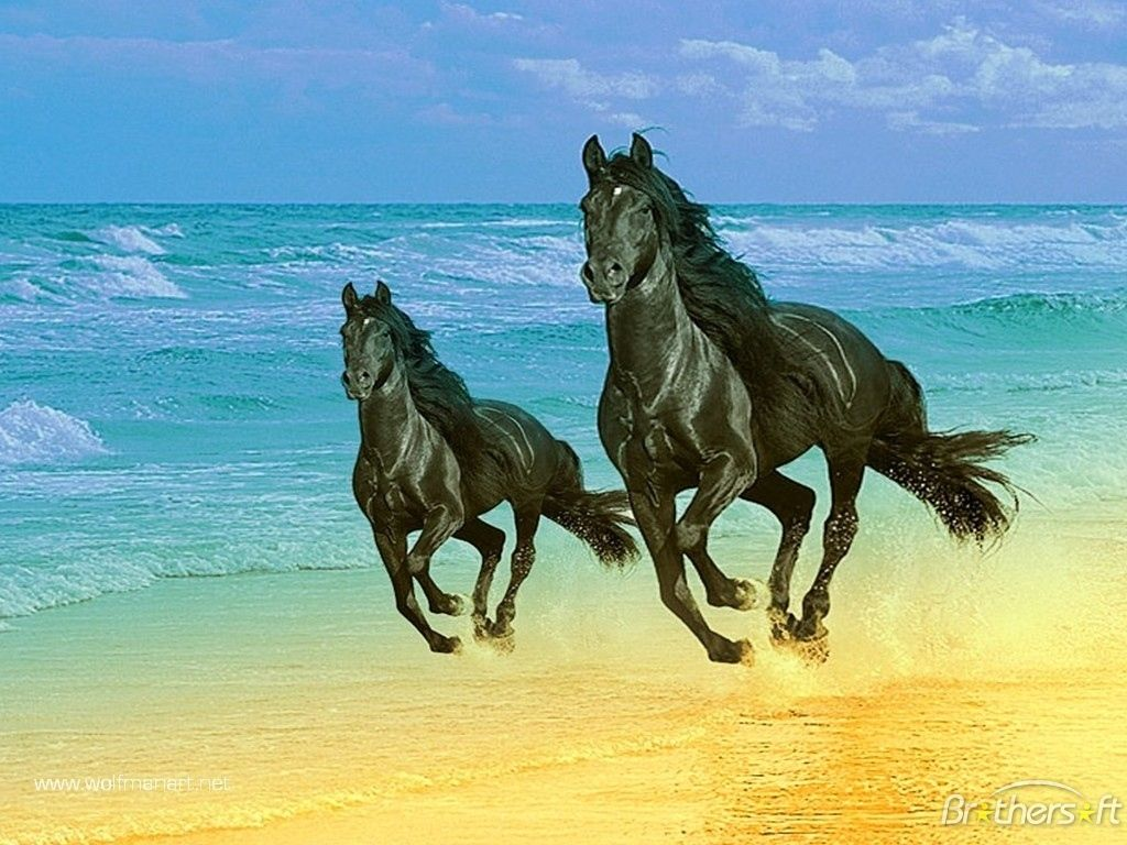 beatiful horse picture | tags 7 horse wallpaper arabian horse wallpaper beautiful horse .