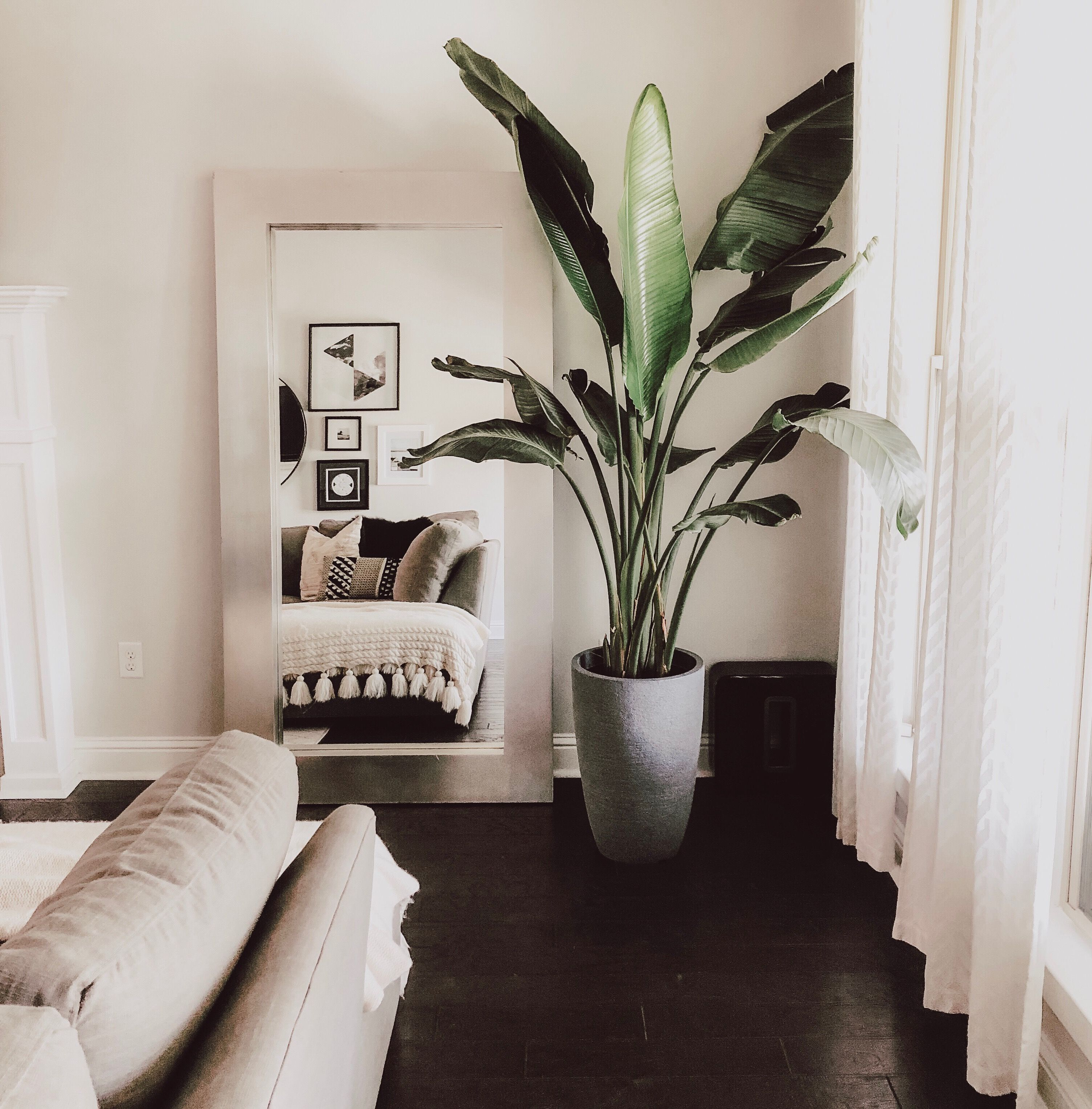Modern House Plants | Living Room Modern, Living Room Plants, Home Decor Bedroom